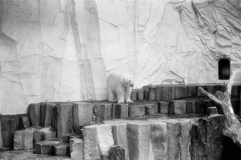 シロクマは赤外線カメラに写らないって本当?実験結果