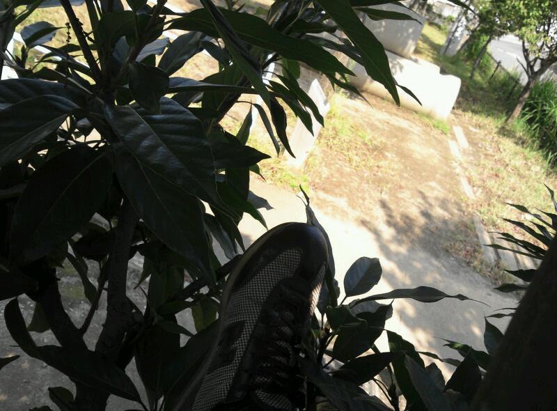 公園の木は登りやすい